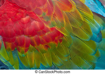 Red-and-green Macaw feathers - Beautiful texture of Red and...