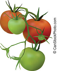 tomatoes - red and green tomatoes