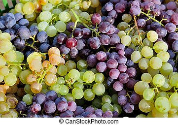 Red and green vine grapes for backg