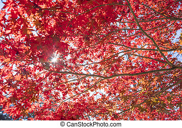 Red and orange autumn leaves with sunlight background