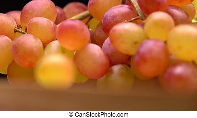 Red and orange grape bunch 4K macro pan shot, shallow DOF -...