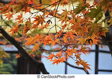 Red and orange maple leaves at Kyoto temple in Autumn