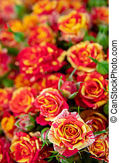 Red and orange roses.