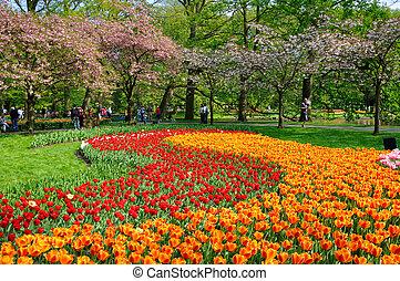 Red and orange tulips in Keukenhof park in Holland