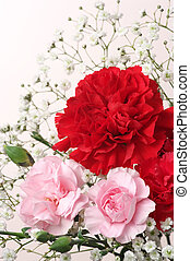 Red and pink Carnation Bouquet. (vertical) - Close up of...