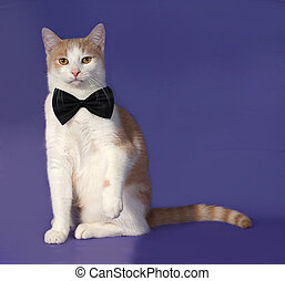 Red and white cat in bow tie sitting on blue