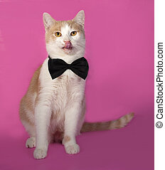 Red and white cat in bow tie sitting on pink