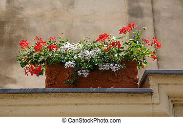 Red and White Flowers in Planter