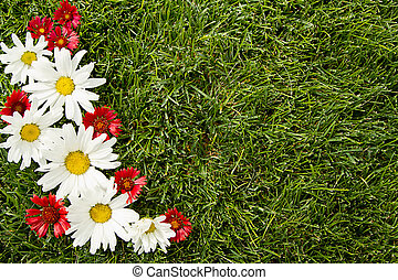 red and white flowers on grass