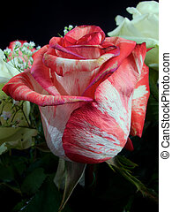 Red and white wedding colourful bouquet of flowers
