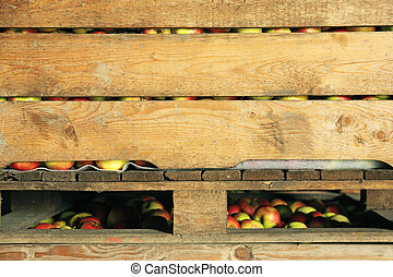 Red and yellow apples in crate