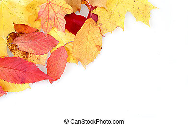 red and yellow autumn leaves frame