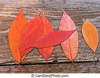 Red and Yellow autumn leaves on a wooden background