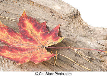 Red and yellow fallen leaf