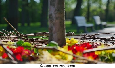 red and yellow flowers around the tree trunk closeup with...