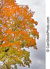 Red and yellow foliage in the autumn