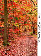 Red and yellow forest in the autumn, Europe