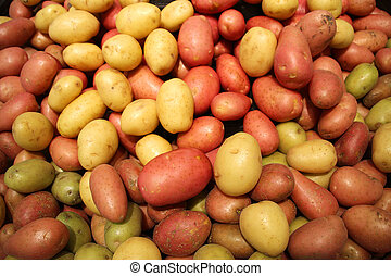 Red and yellow large potatoes are sold in the market