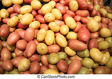 Red and yellow small potatoes are sold in the market