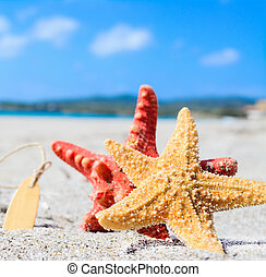 starfish by the sea