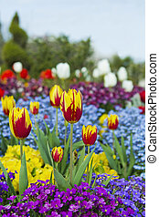 Red and Yellow Tulips in Garden of Flowers