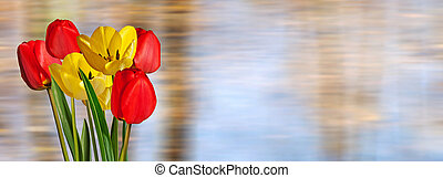 Red and Yellow Tulips on the Unfocused Background.