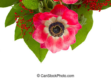 anemone flower with green leaves
