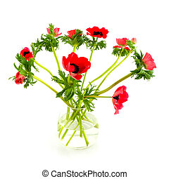 red anemones in glass vase isolated over white