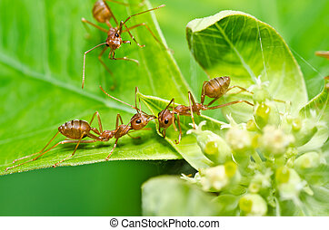 red ant in green nature