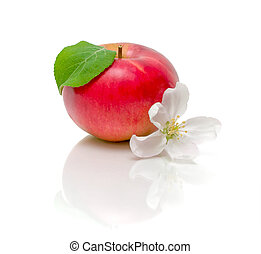 red apple and apple blossom on a white background
