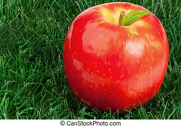 Red apple and its leaf on grass