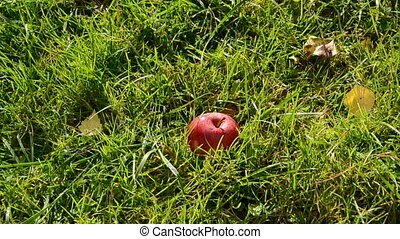 red apple falling on the grass