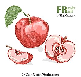 Red apple isolated on white background. Fruit vector illustration sketch