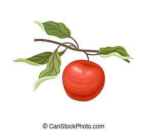 Red apple on a branch. Vector illustration on a white background.