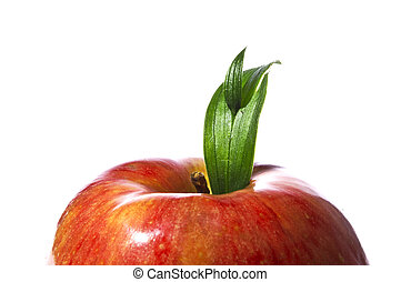Red apple with green leaf - macro shot