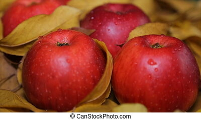 Red apples among yellow leaves - Ripe red apples lie on...