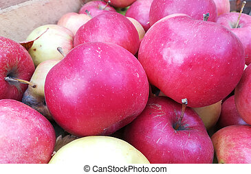red apples background. Sweet tasty fresh fruits.