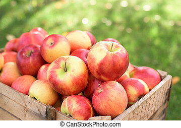 Red apples- close up
