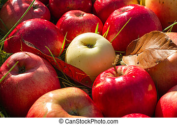 Red apples close up