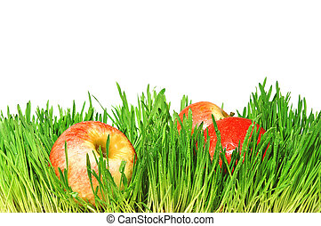 Red apples in a green grass