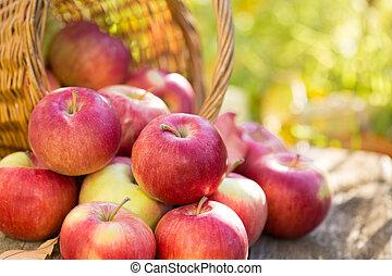 Red apples in autumn garden
