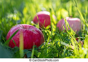 Red apples on a green grass