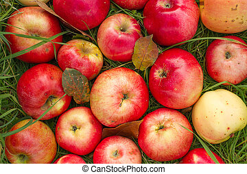 Red apples on the green grass