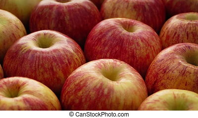 Red Apples Rotating