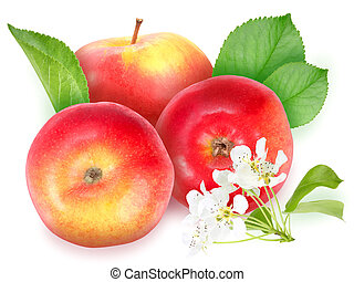 Red apples with green leaf and flowers