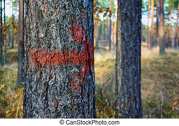Red arrow painted on the trunk of a pine