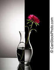 red aster flower - red flower in vase over black and white ...