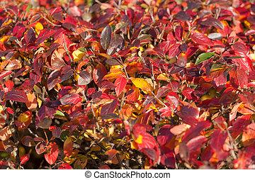 red autumn background