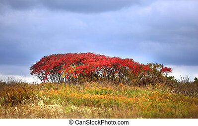 Red autumn bush