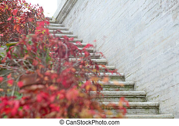 Red autumn ivy on stairs